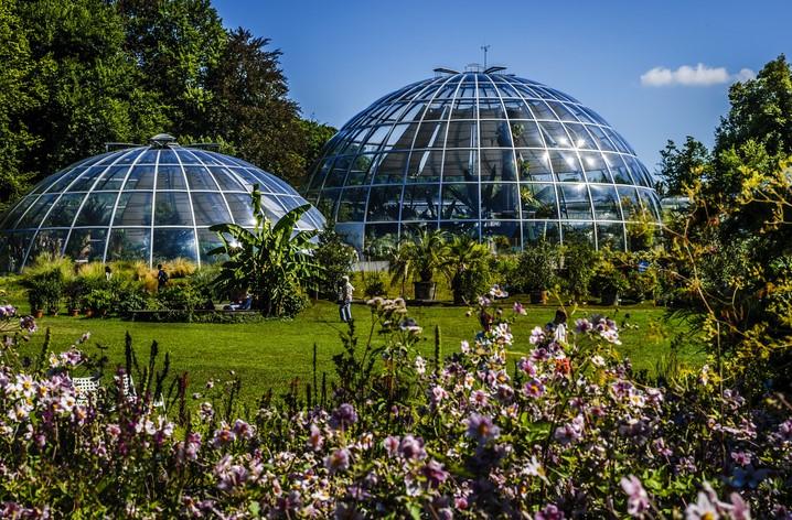 Ботанический сад в Цюрихе. Фото